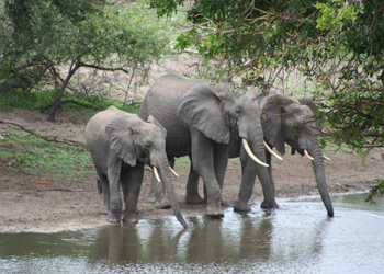 Kruger National Park, South Africa Safari Tours